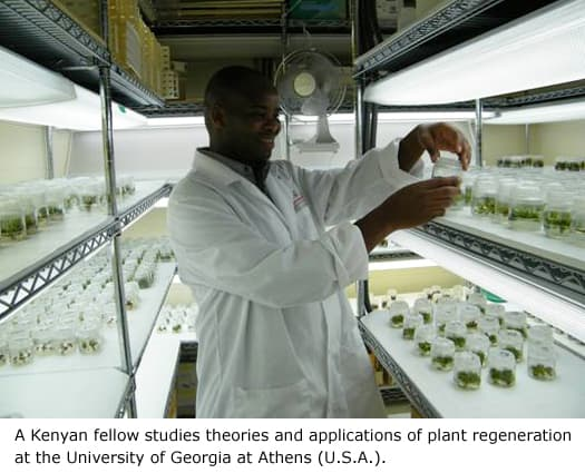A Kenyan fellow studies theories and applications of plant regeneration at the US University of Georgia at Athens.
