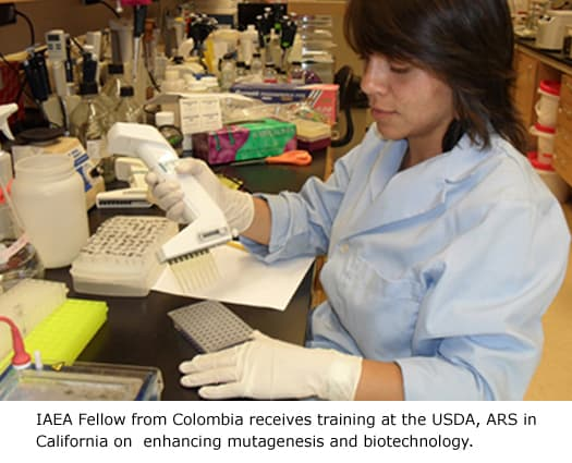 IAEA Fellow from Colombia receives training at the USDA, ARS in California on enhancing mutagenesis and biotechnology.